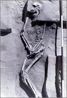 mungo skeleton