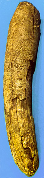 Predmost engraved tusk