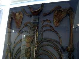 Kebara Skeleton