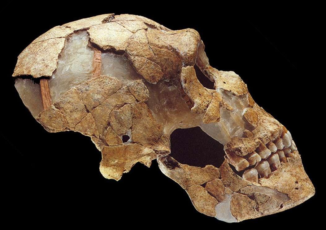 Saint Césaire Neanderthal skeleton