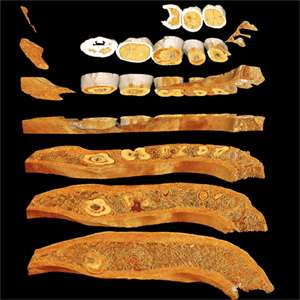 Neandertal mandible CT scan