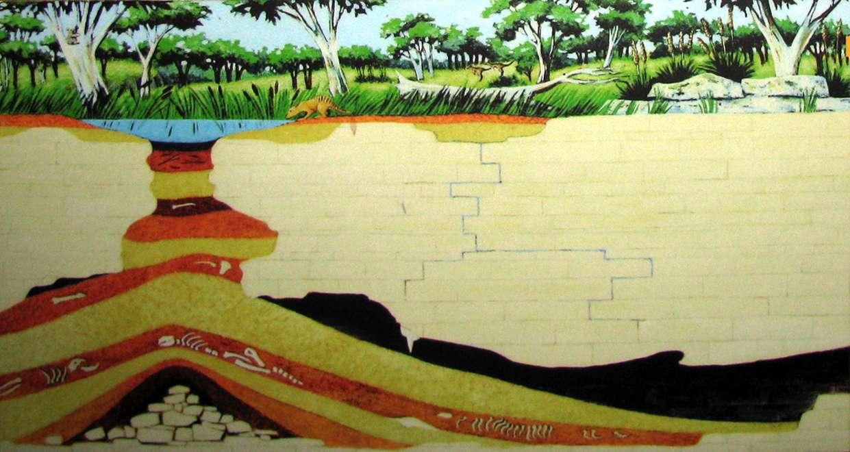 Naracoorte Caves Snake Skeleton Diagram Images Pictures Becuo Sink Hole Formation