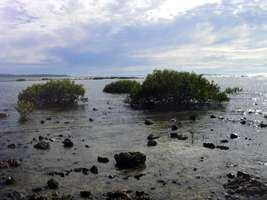 Lagoon with mangroves at Diggers Camp Beach