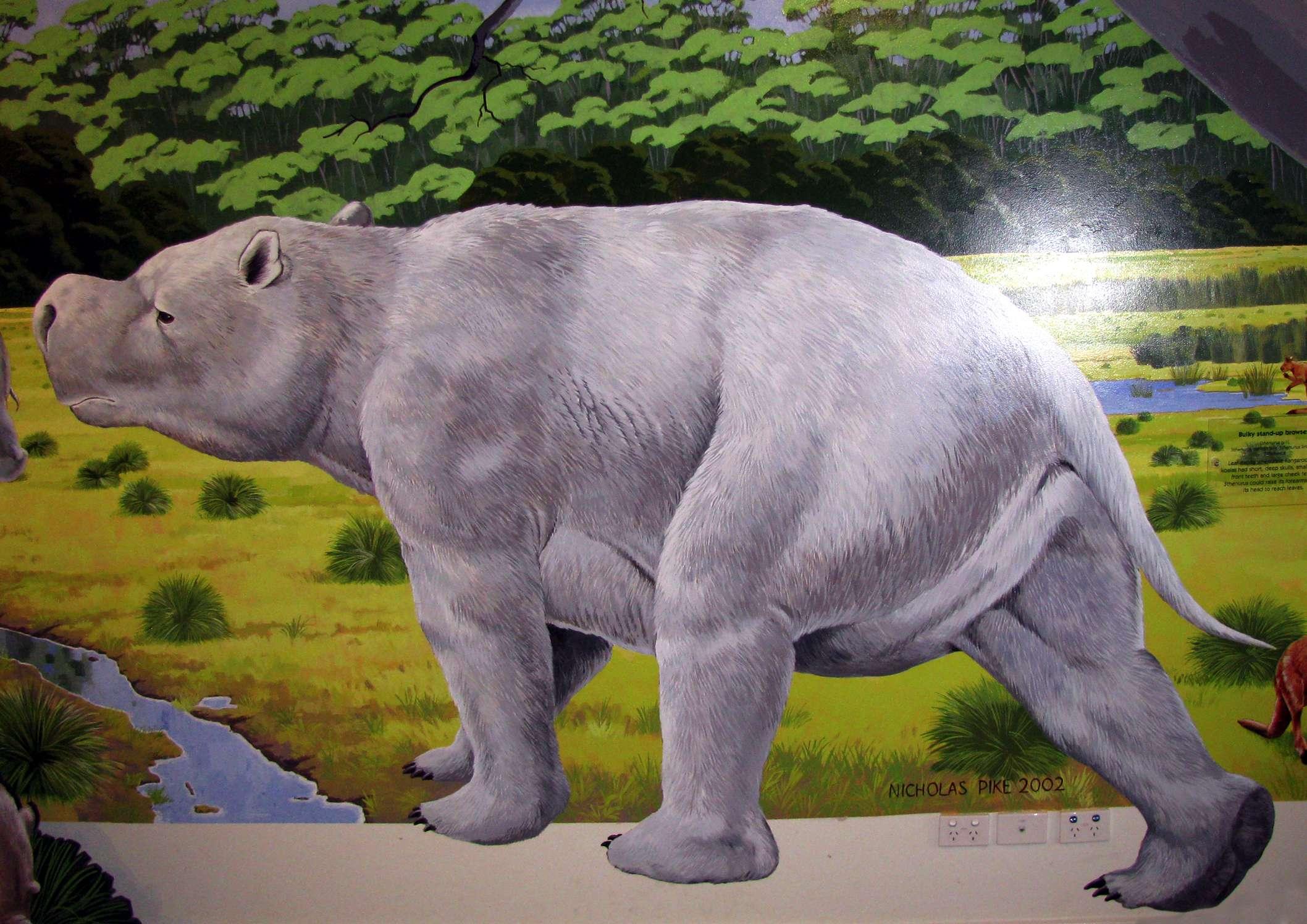 Giant Kangaroo Skeleto...