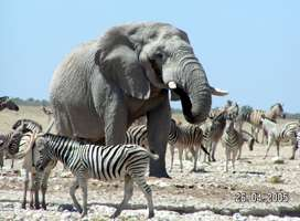 Namibia animals
