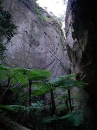 carnarvon Ward's Canyon