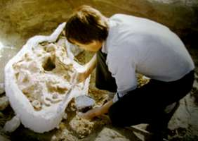 preservation of a mammoth skull