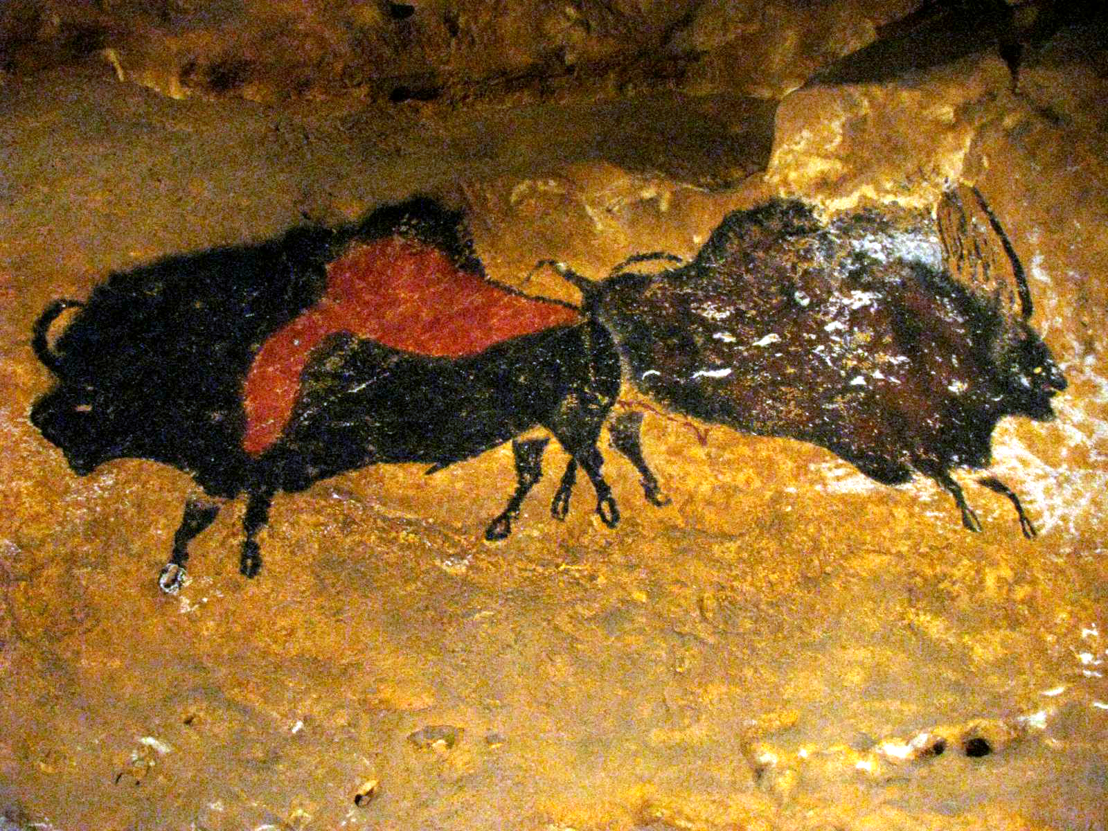 Shaded image of a cave bear, with an incomplete outline of ... |Lascaux Cave Paintings Bear