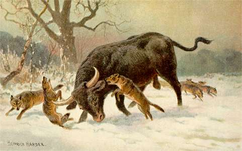 Aurochs attacked  by wolves