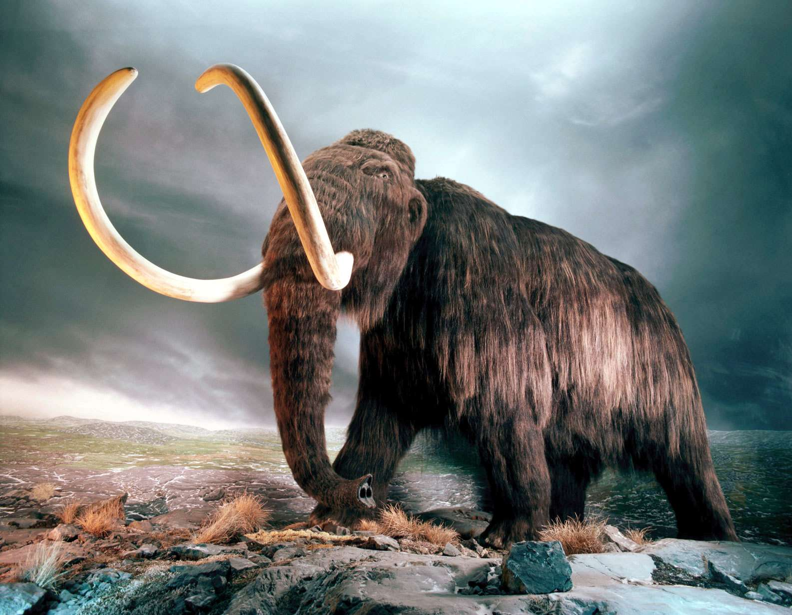 Mammoths Elephants And The Wooly Rhinoceros Telephone Patch Panel Wiring Diagram