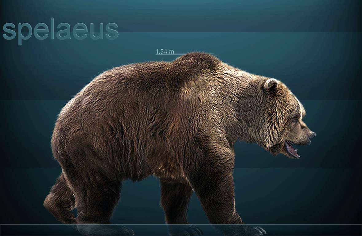 The bear and cavebear in fact myth and legend buycottarizona Image collections