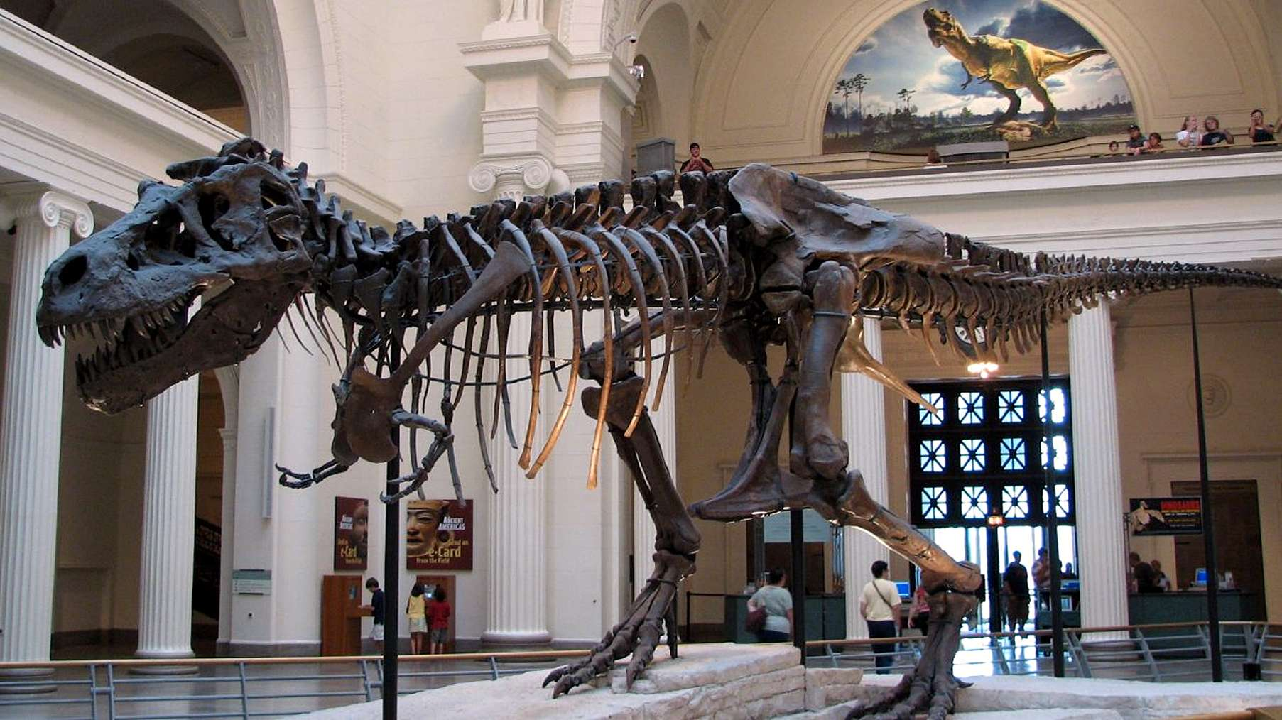 Field Museum of Natural History  ChicagoTyrannosaurus Skeleton In Museum