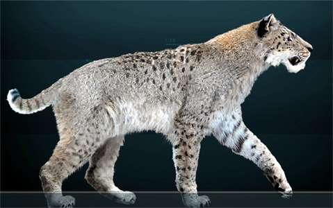 isturitz big cat