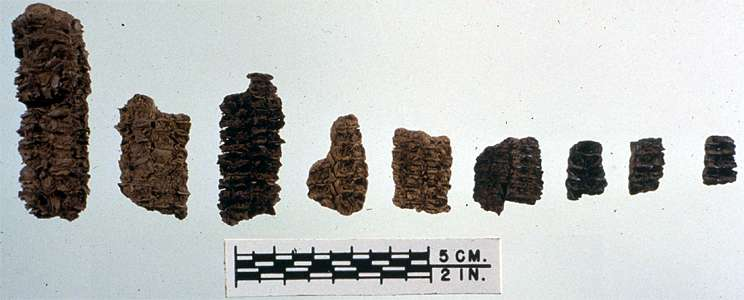 meadowcroft corn cob fragments