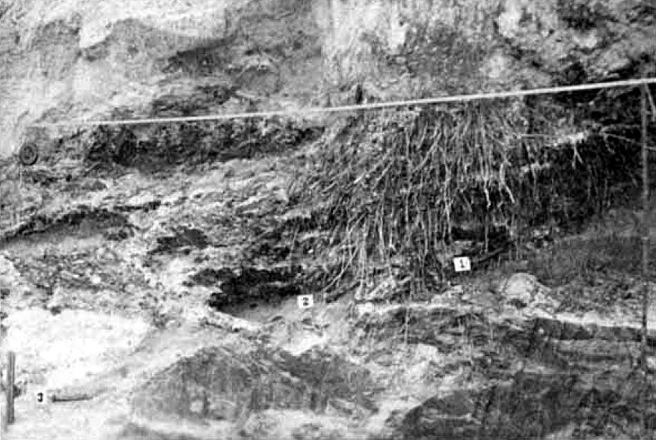 florida vertebrate fossils sites vero canal site