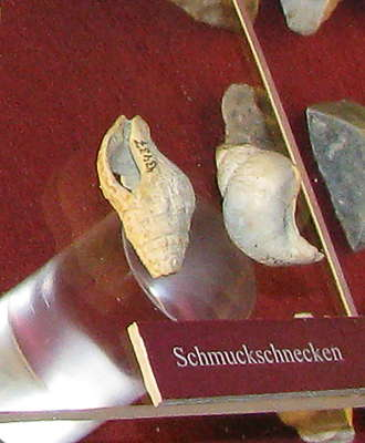 Willendorf layers 1-4 display shells