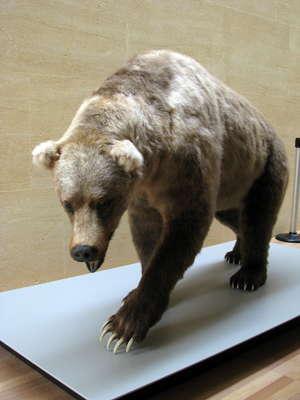 rencontre bear bordeaux
