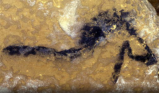 Lascaux horse in Shaft
