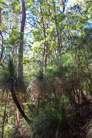 Grass Tree Ridge