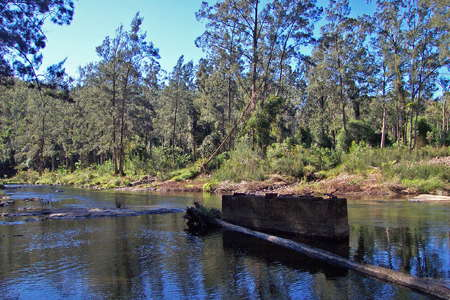Upper Bellinger River