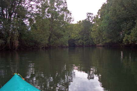 Lower Bellinger River