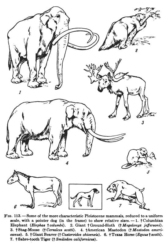 north american pleistocene animals
