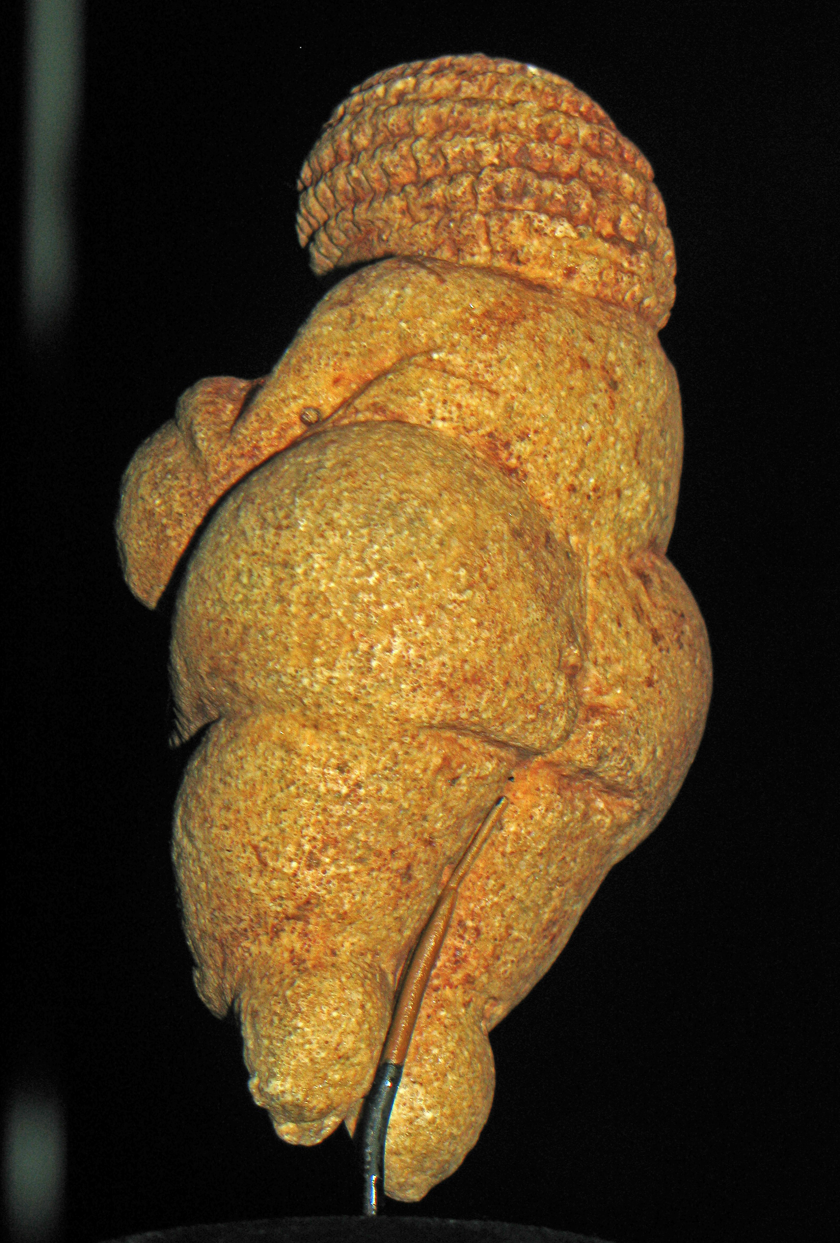 the venus of willendorf The venus of willendorf sculpture was made during the paleothic era between 24,000 and 22,000 bc it was discovered in an excavation near willendorf, austria by josef szombathy, hugo obermaier and josef baye.