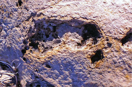 fossilised foot prints