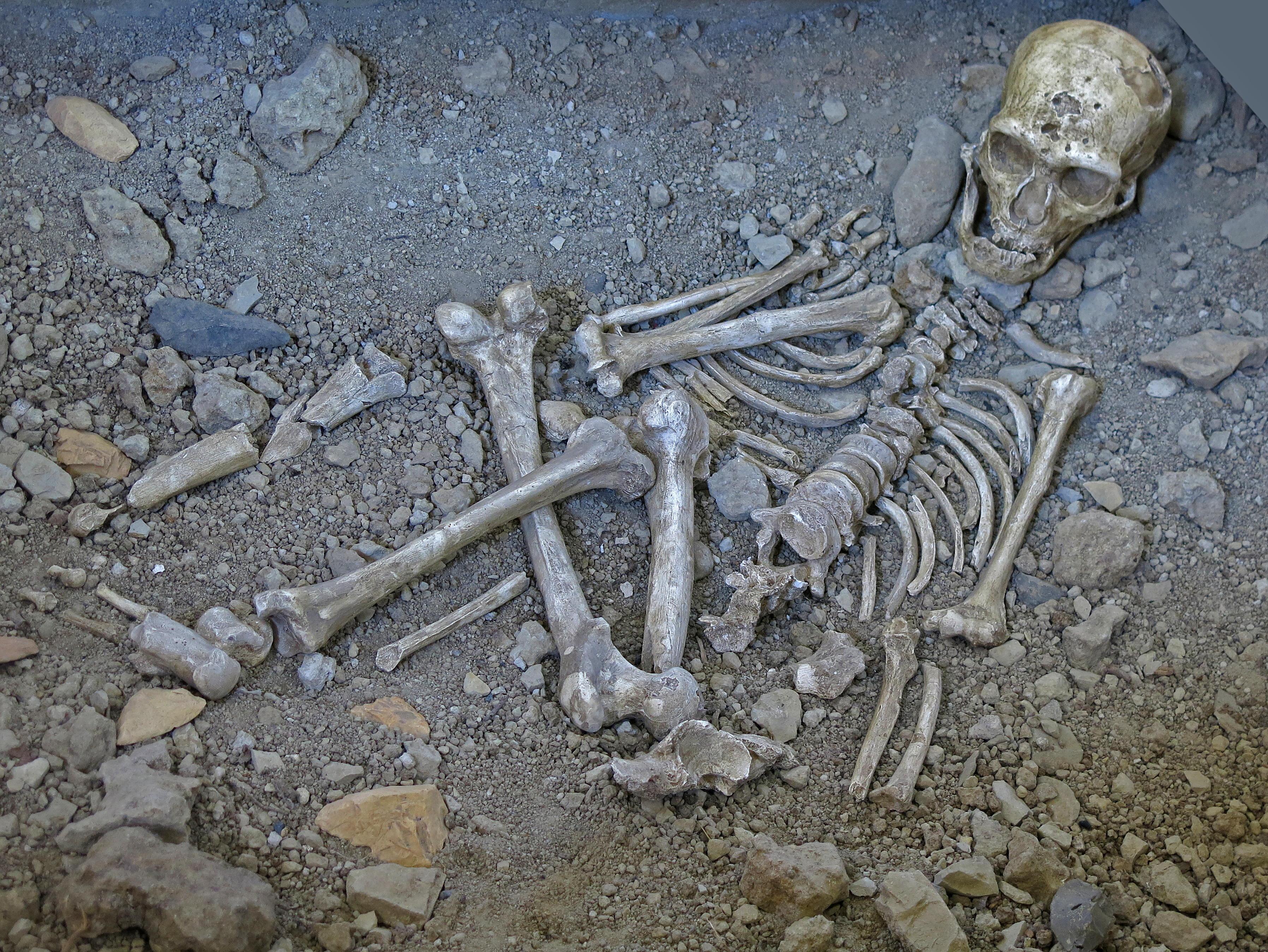 Neanderthal La Chapelle Aux Saints Chapelle-aux-Saints - ...