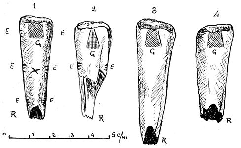 Dousse horse teeth