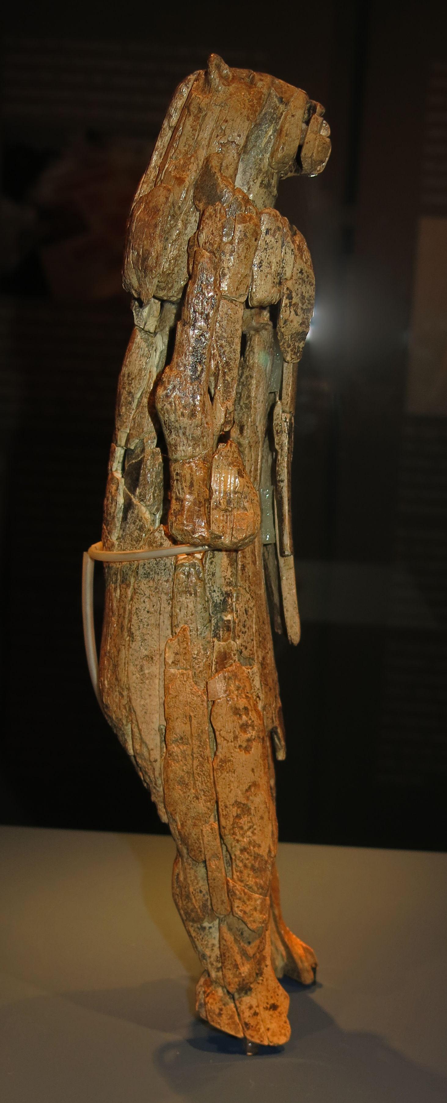 urzeitliches museum blaubeuren