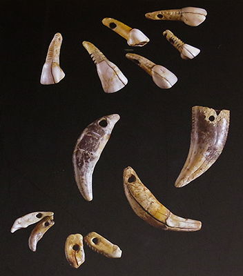 carved teeth