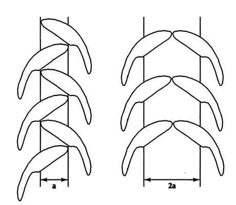 teeth arrangement