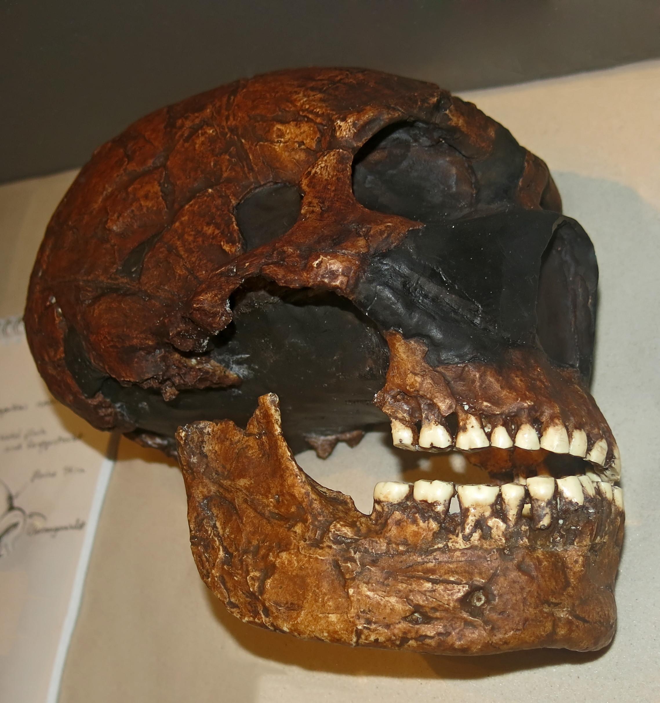 Amud neanderthal amud 1, israel