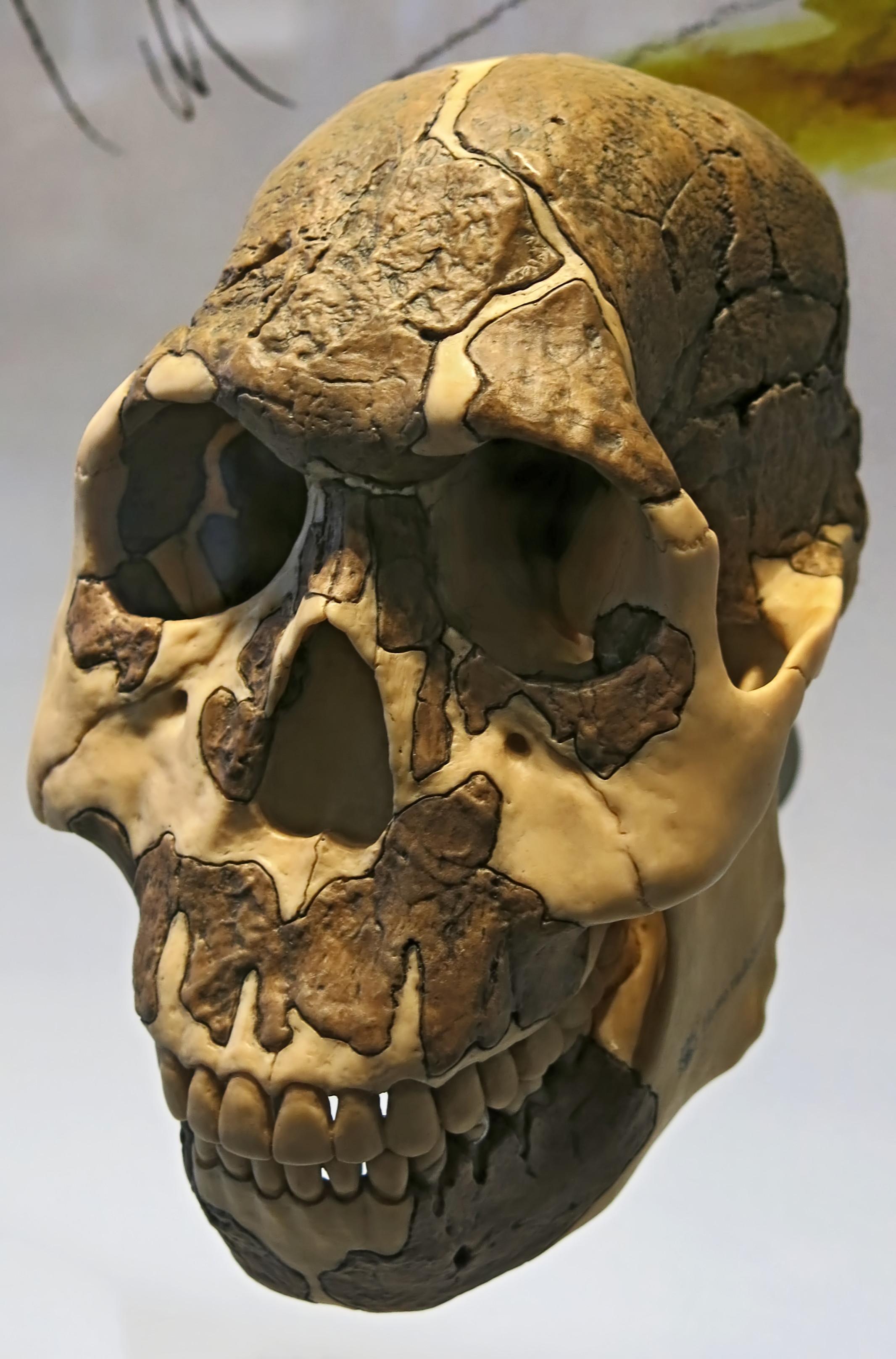 skull 1470 dating websites