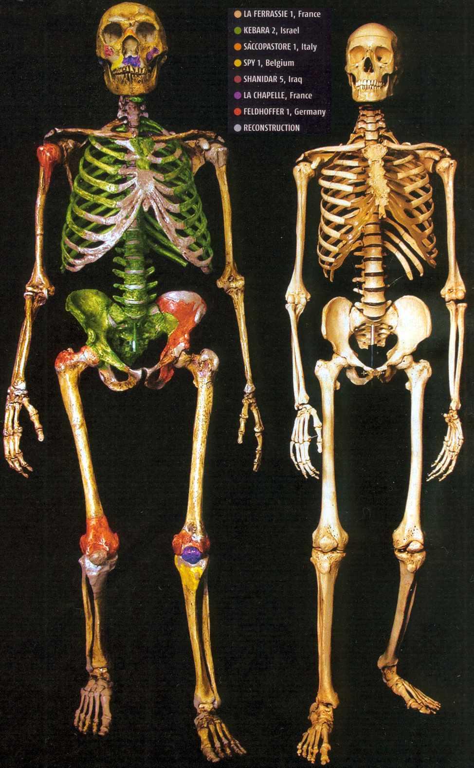 Neandertaler | Steinzeitung