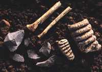 bones teeth flint